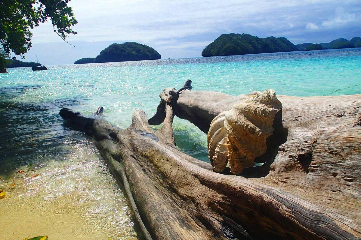 Driftwood on beach in Palau