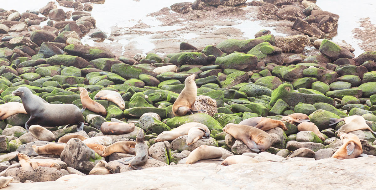 La Jolla Seals and Sea lions