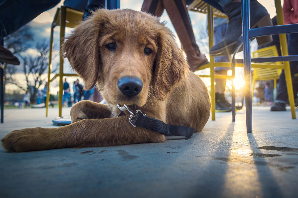 Best Dog-Friendly Restaurant Patios in Minneapolis and St. Paul